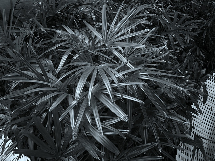digiFilm™ - Black & White
